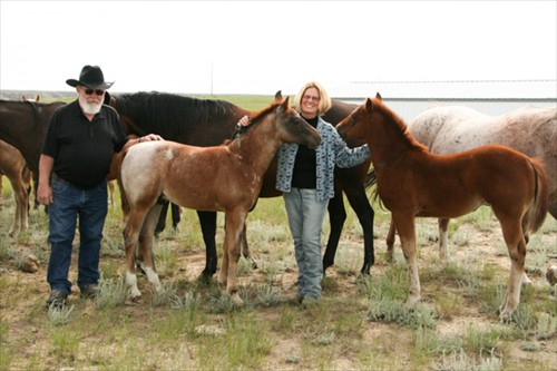 Mark & Barb with mares and a few of the 2016 colts
